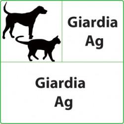 Test veterinari Giardia per cani o gatti