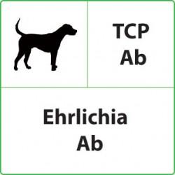 Test veterinari Ehrlichia per Cani