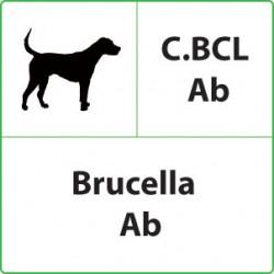 Test veterinari Brucella per Cani